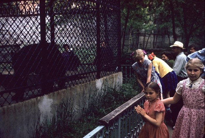Назад в 41-й. Как Харьковский зоопарк пережил немецкую оккупацию (ФОТО), фото-5