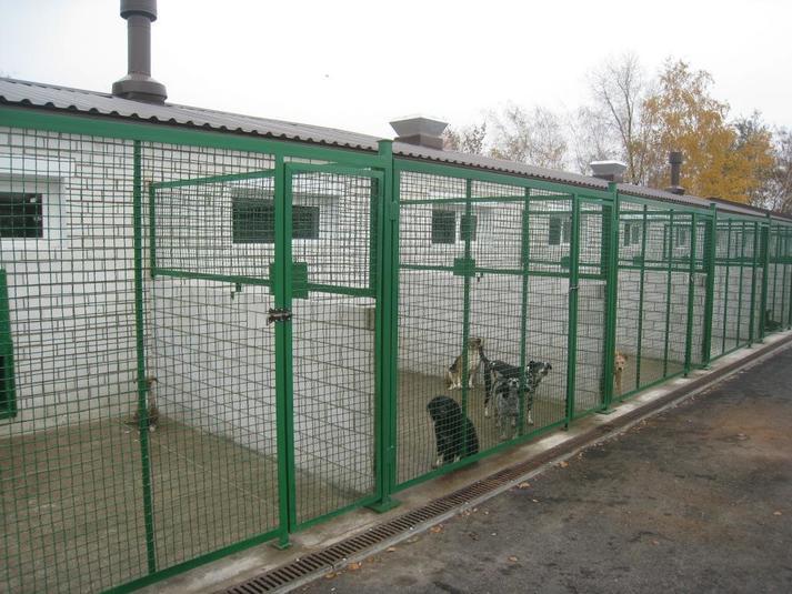 Новый закон о животных: обязательная стерилизация, регистрация и высокие штрафы, фото-2