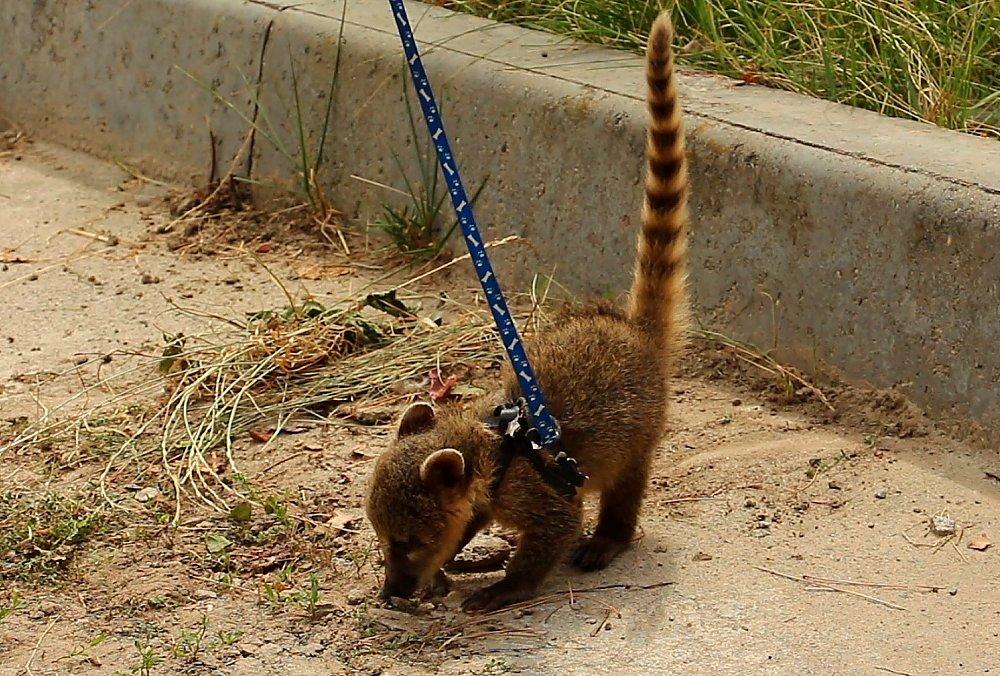 фото: zoo.kharkov.ua