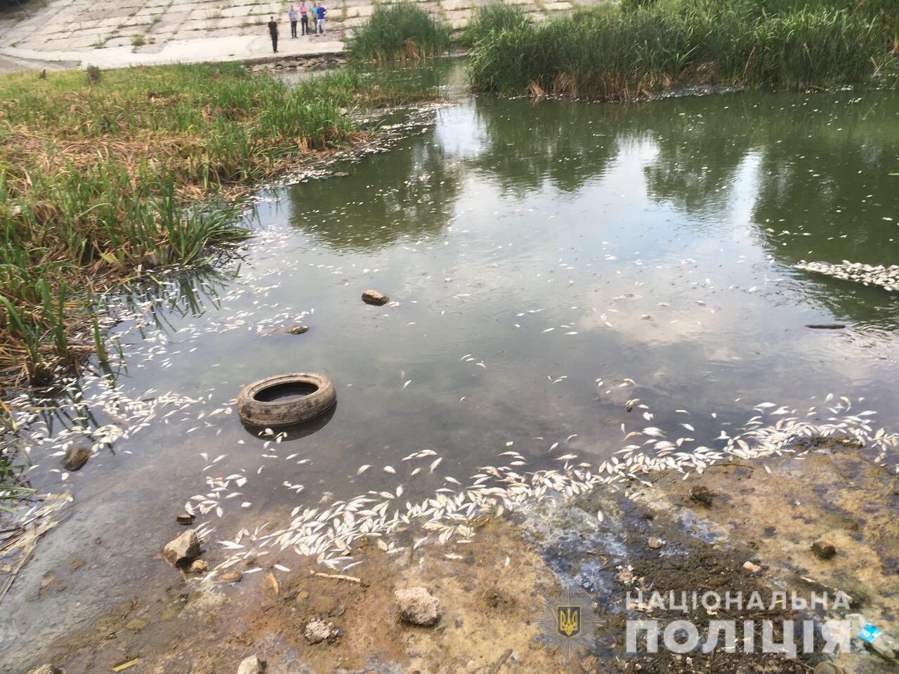Массовый мор рыбы в Харькове: полиция проводит расследование, - ФОТО, фото-2