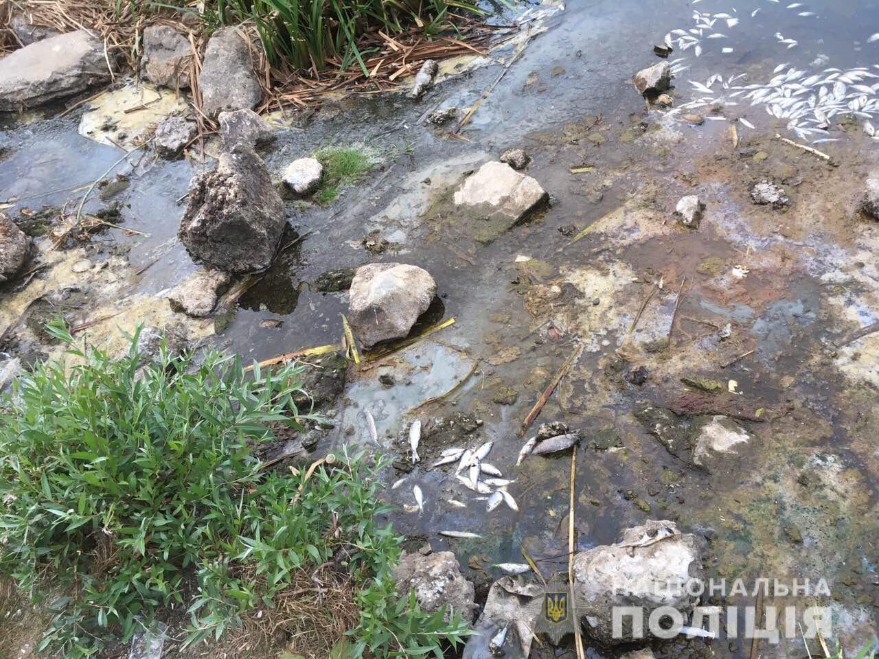 Массовый мор рыбы в Харькове: полиция проводит расследование, - ФОТО, фото-3