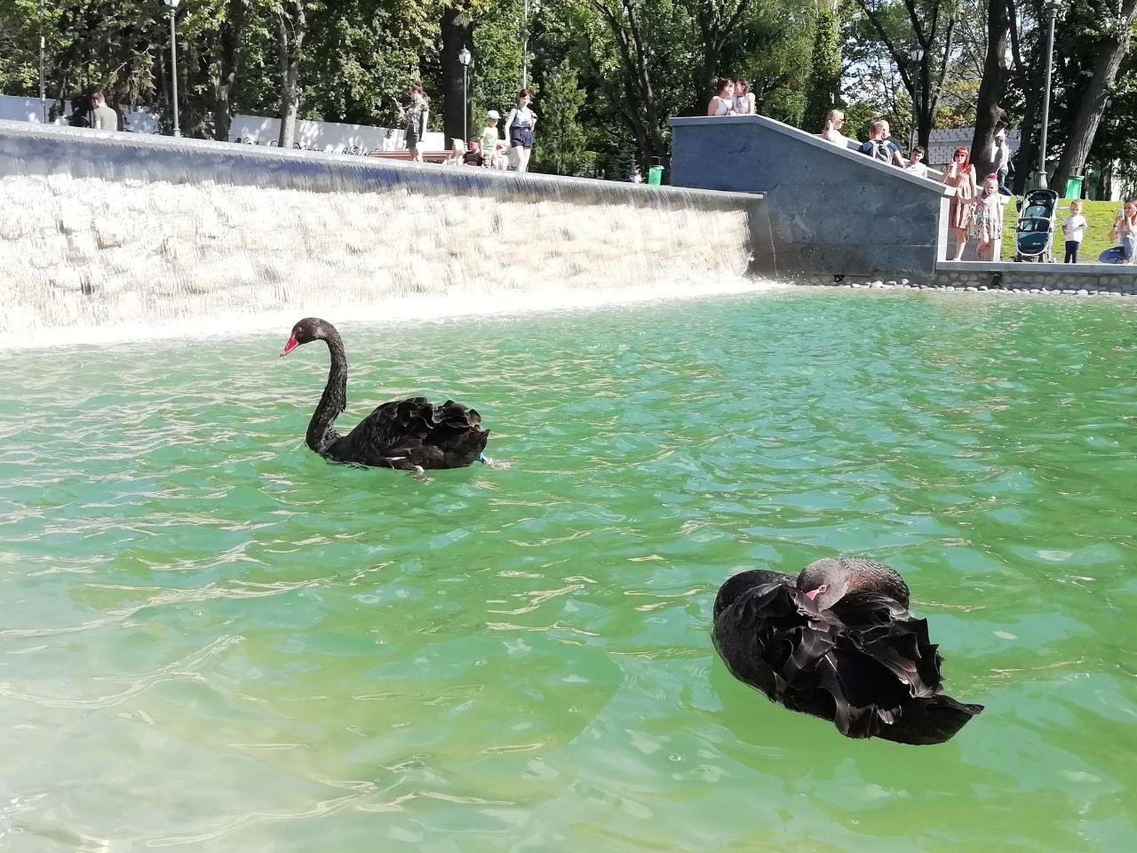 Сколько денег потратили на реконструкцию «Каскада» и озеро в саду Шевченко, - ФОТО, фото-9
