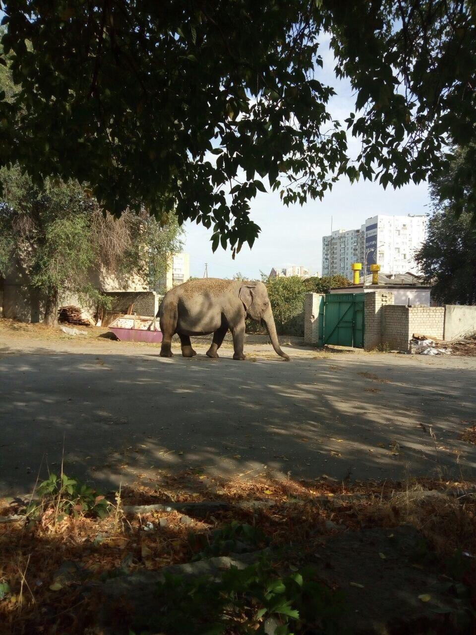 В Харькове заметили слона, который разгуливал возле детсада, - ФОТО, ВИДЕО, фото-1
