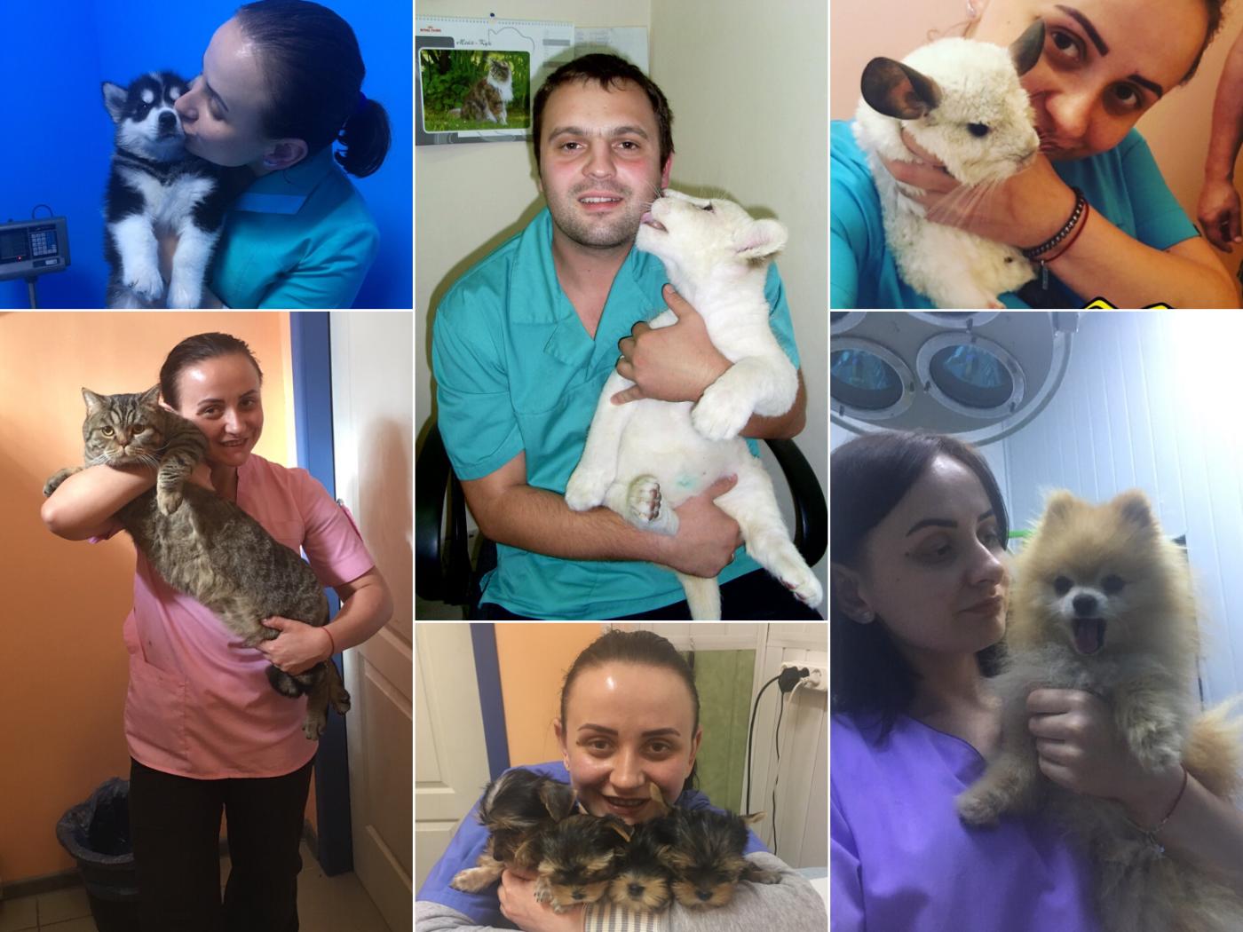 Домашние животные и все для них. Советы от 057.ua, фото-1