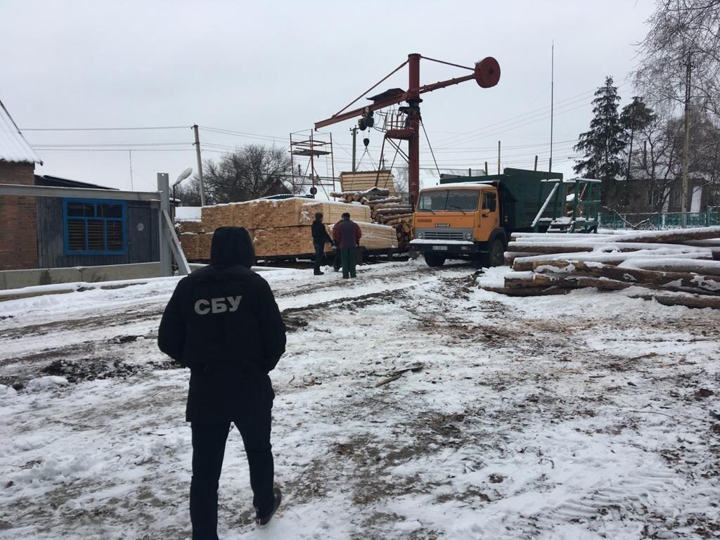 В Харькове СБУ задержала директора лесхоза, который продал древесины на 5,5 миллионов гривен, - ФОТО, фото-2