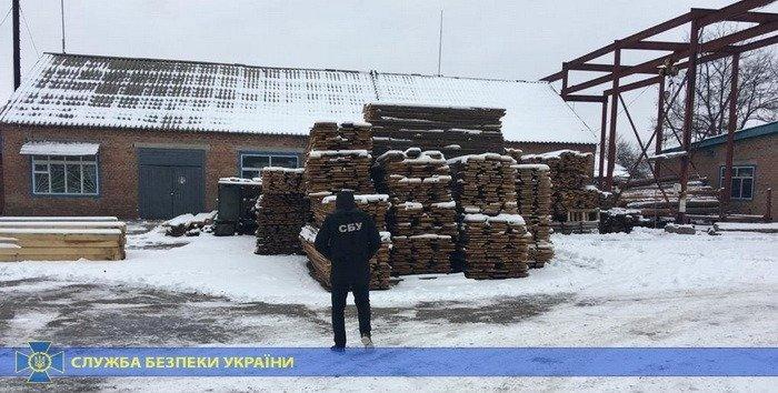 В Харькове СБУ задержала директора лесхоза, который продал древесины на 5,5 миллионов гривен, - ФОТО, фото-3