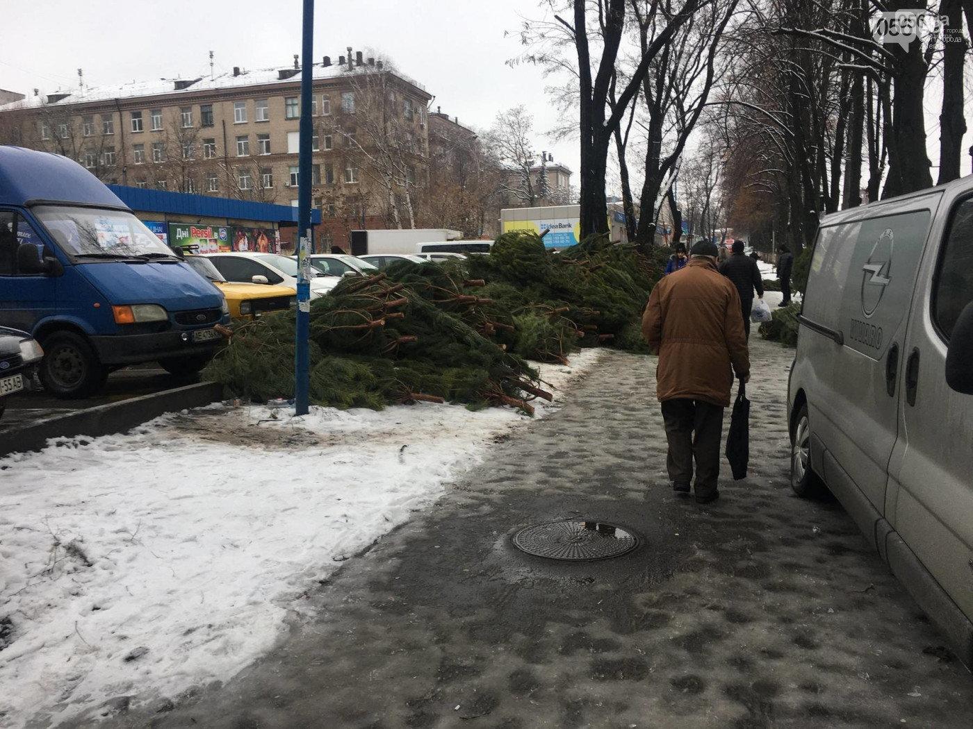 Новогодняя ёлка в Харькове: как выбрать и сколько она стоит, - ФОТО, фото-3