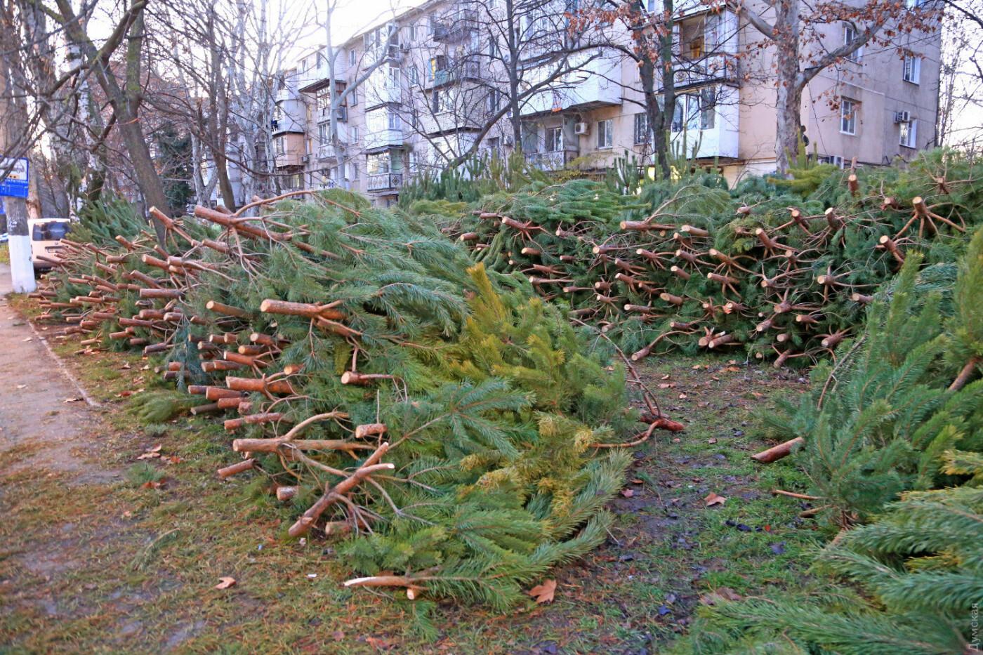 Новогодняя ёлка в Харькове: как выбрать и сколько она стоит, - ФОТО, фото-2