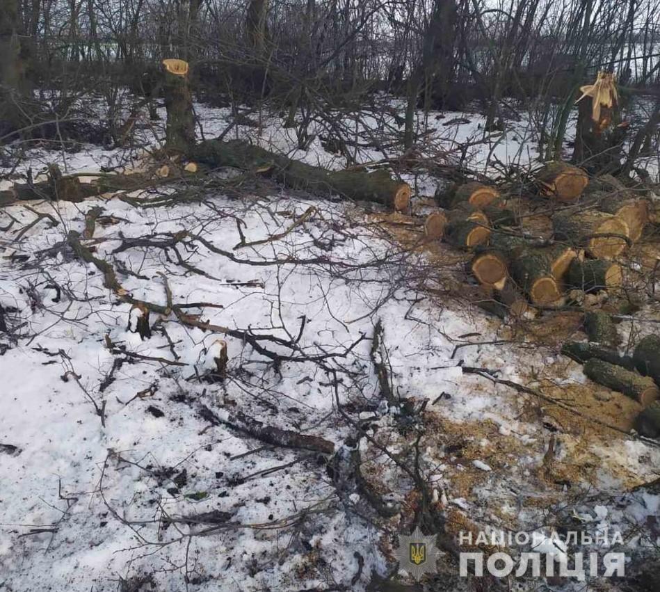 В Харьковской области полицейские «накрыли» нескольких «черных лесорубов», - ФОТО, фото-4