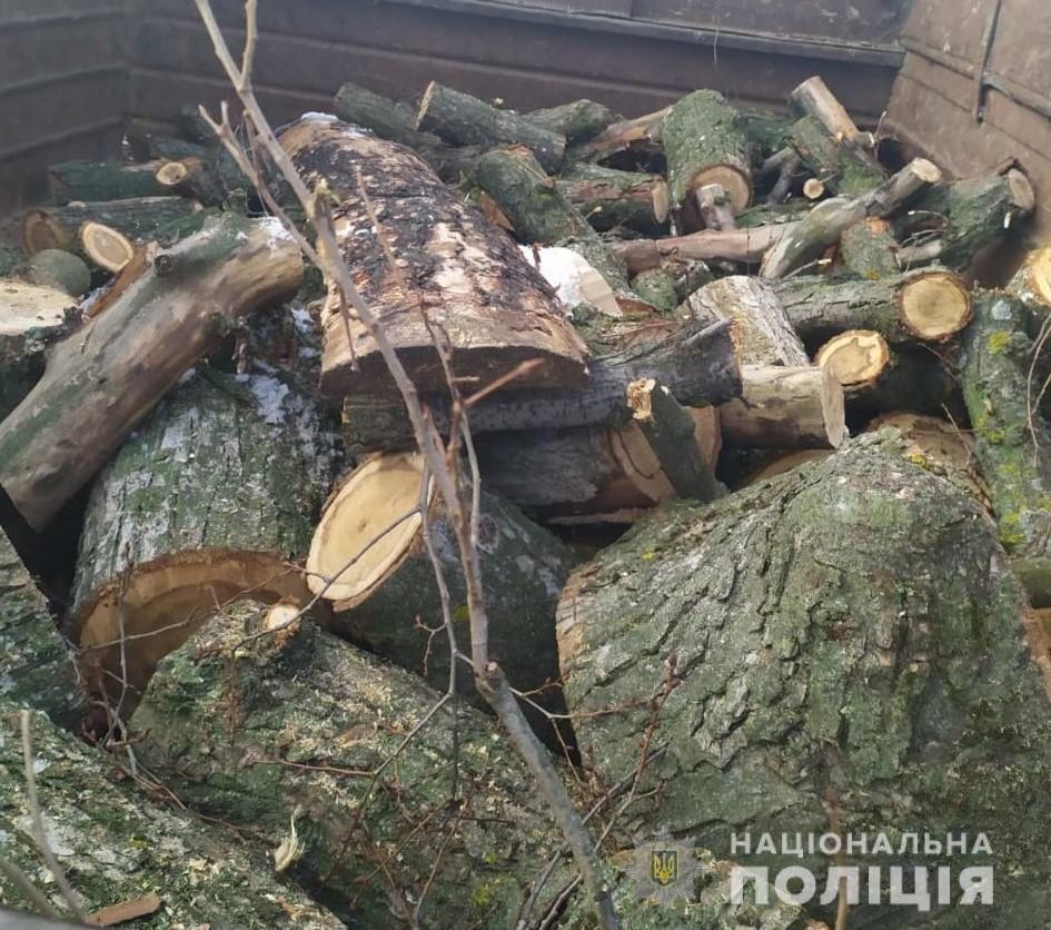В Харьковской области полицейские «накрыли» нескольких «черных лесорубов», - ФОТО, фото-3