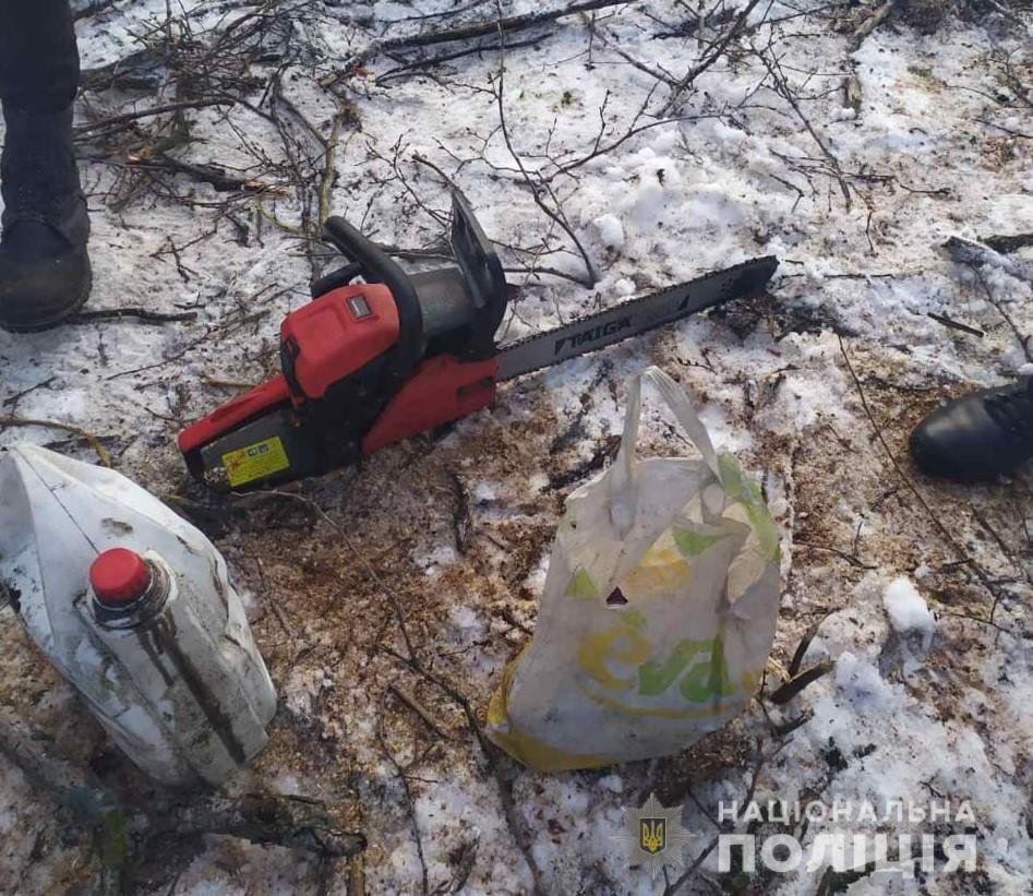 В Харьковской области полицейские «накрыли» нескольких «черных лесорубов», - ФОТО, фото-2