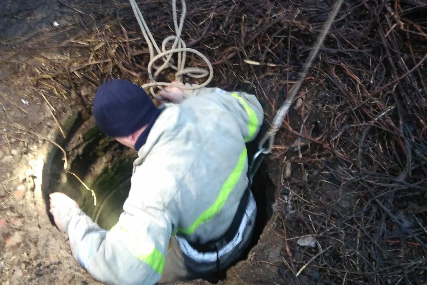 На Харьковщине спасатели 40 минут доставали теленка, провалившегося в заброшенный колодец, - ФОТО, фото-2