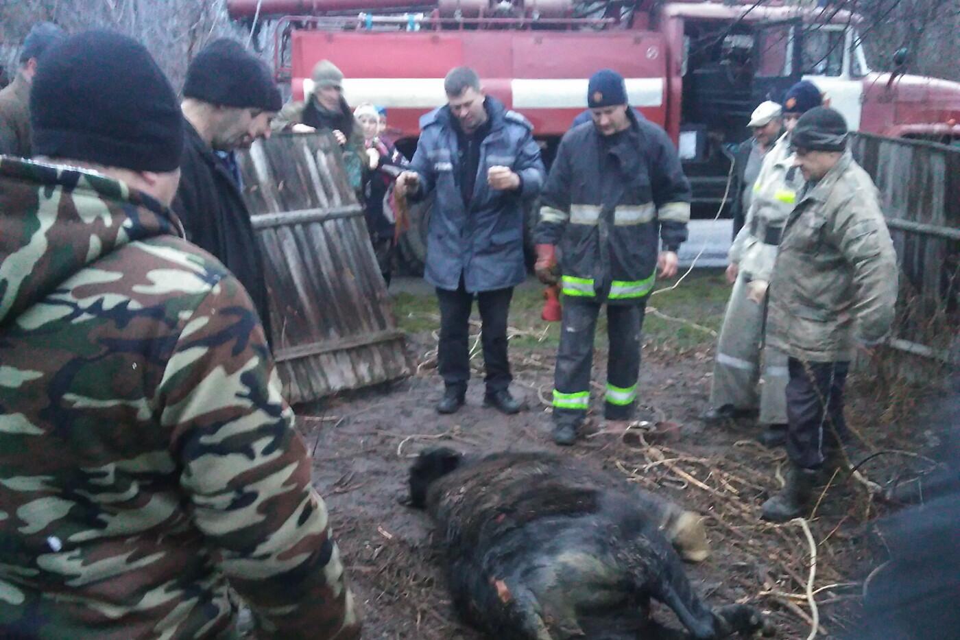 На Харьковщине спасатели 40 минут доставали теленка, провалившегося в заброшенный колодец, - ФОТО, фото-4