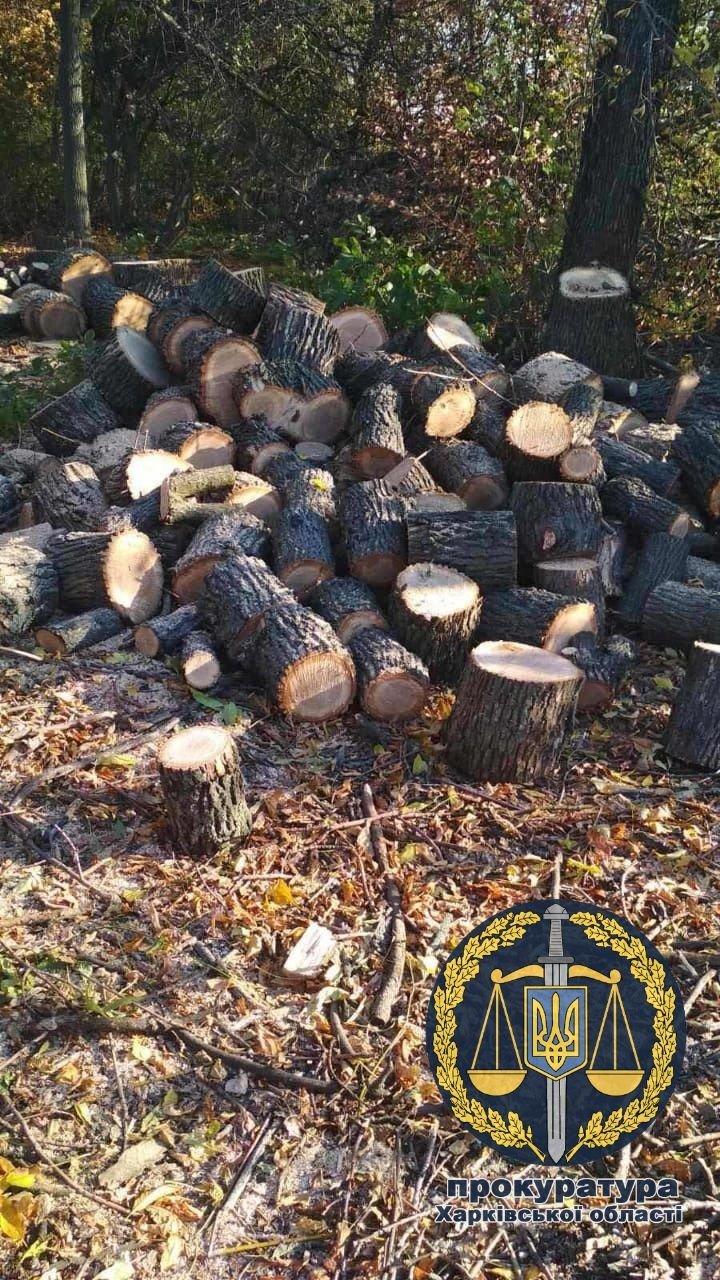 На Харьковщине пожилой мужчина незаконно рубил деревья и нанес ущерб государству на полмиллиона, - ФОТО, фото-1
