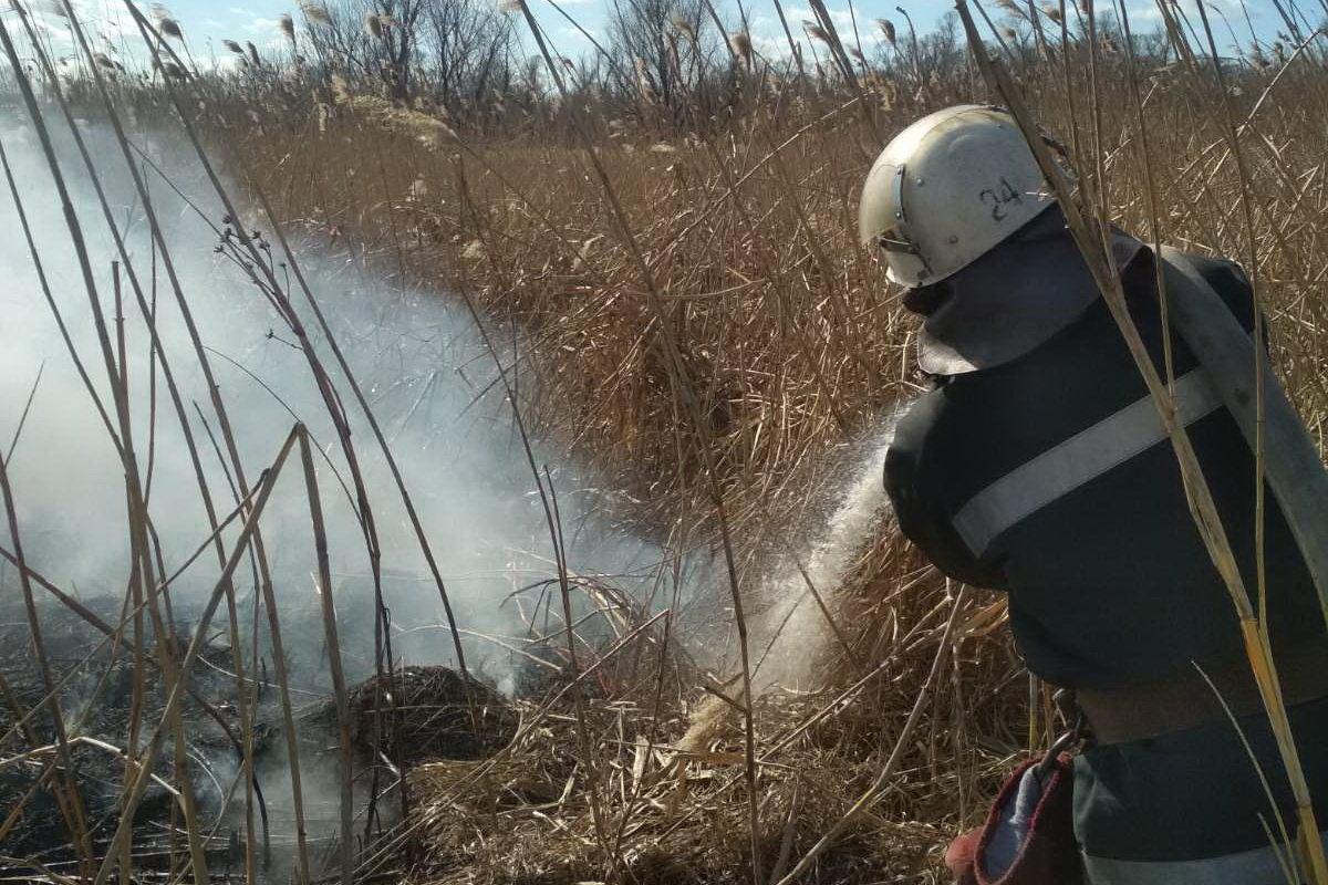 На Харьковщине спасатели тушили десятки пожаров в природных экосистемах, - ФОТО, фото-3