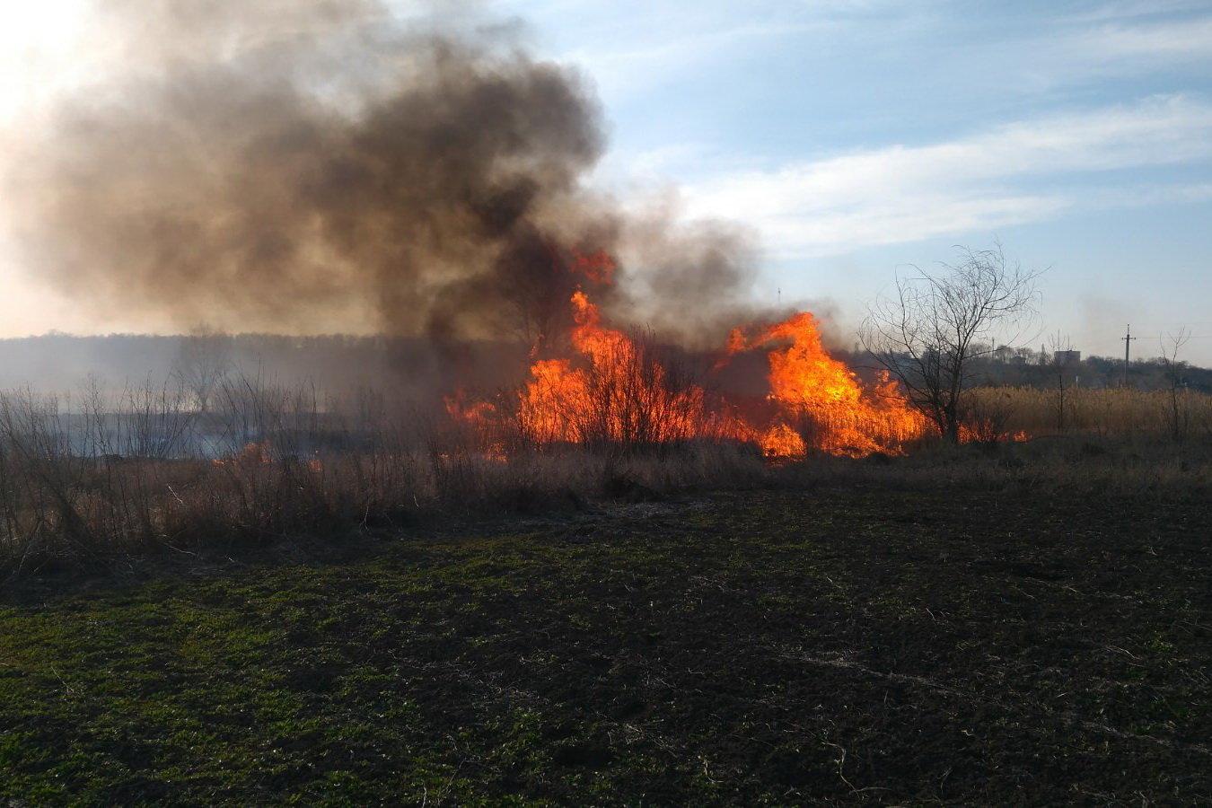 На Харьковщине спасатели тушили сотню пожаров в природных экосистемах: пострадала женщина, - ФОТО, фото-2