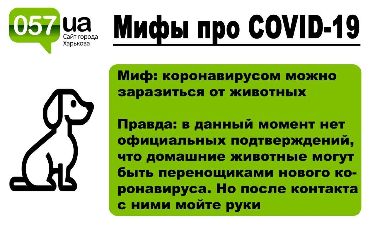 "ТОП-7 ""типичных"" мифов о коронавирусе COVID-19, - ФОТО, фото-2"