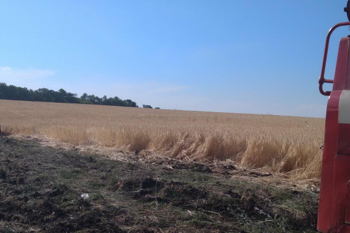 На Харьковщине бойцы ГСЧС спасли ячменное поле и хвойный лес от масштабного пожара, - ФОТО, фото-2