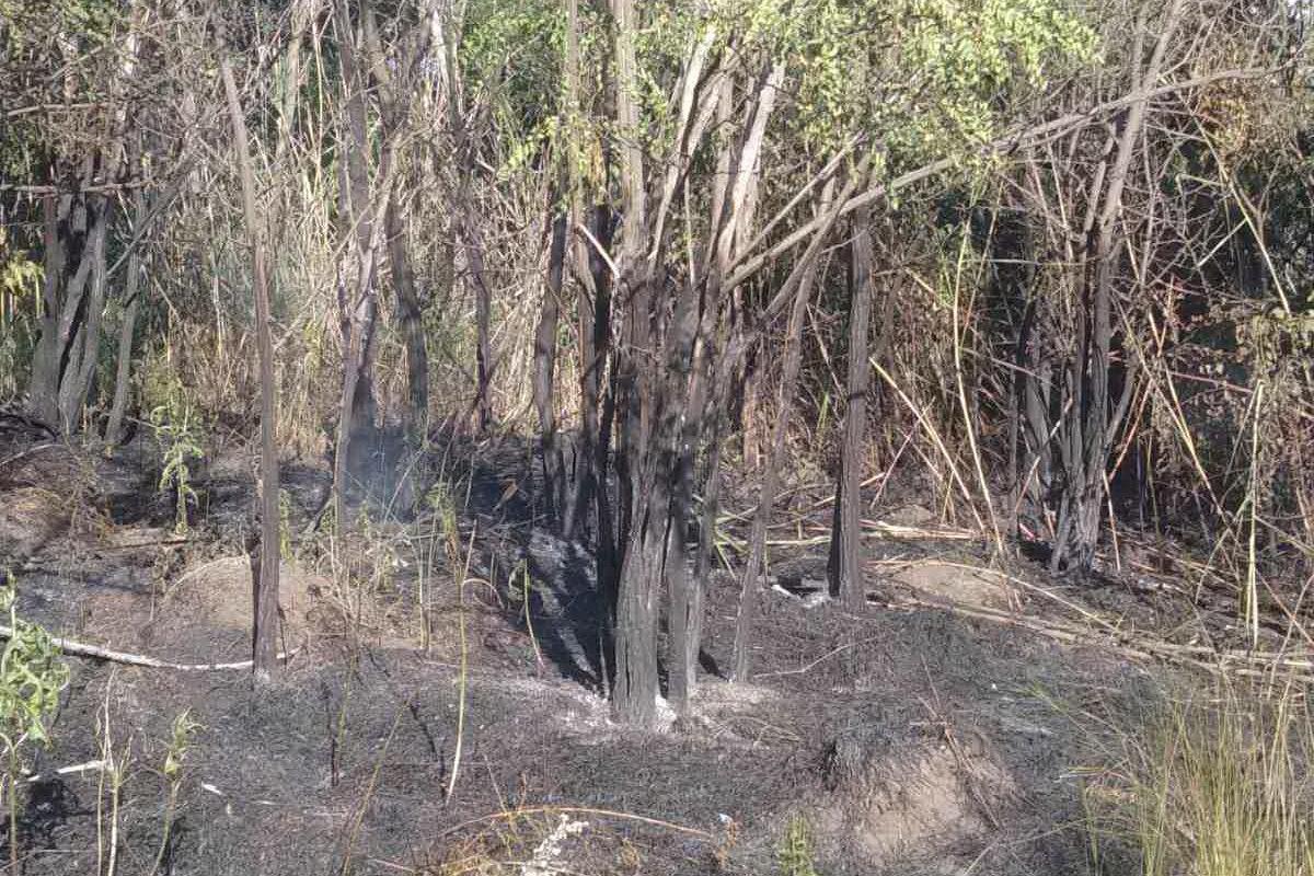 На Харьковщине бойцы ГСЧС спасли ячменное поле и хвойный лес от масштабного пожара, - ФОТО, фото-3