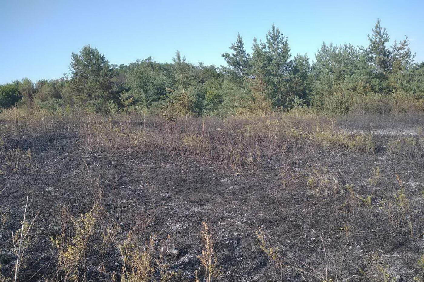 На Харьковщине бойцы ГСЧС спасли ячменное поле и хвойный лес от масштабного пожара, - ФОТО, фото-4