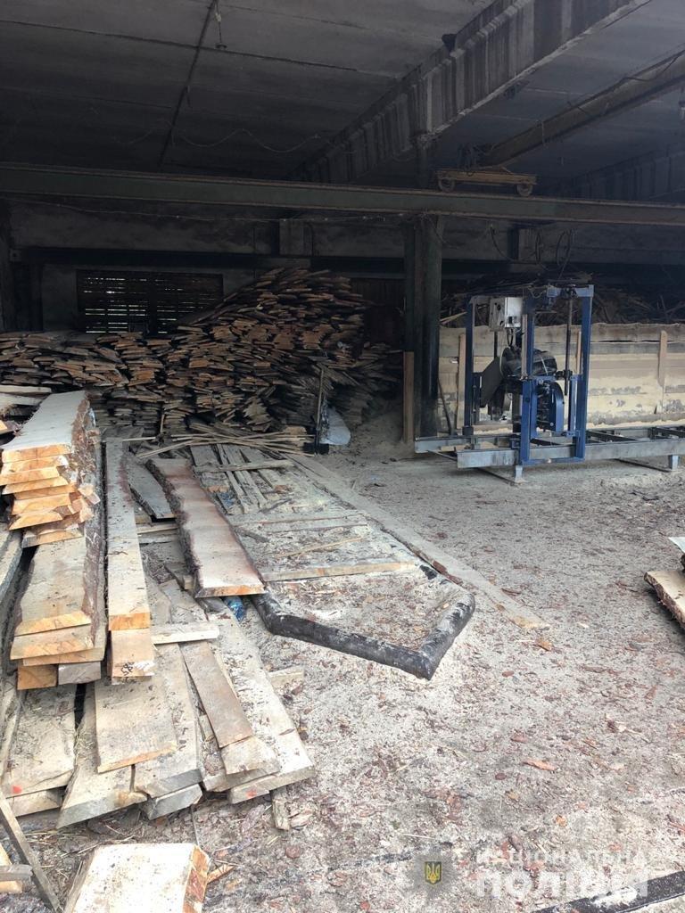 На Харьковщине полицейские разоблачили преступную группу в незаконной вырубке леса,- ФОТО, фото-3