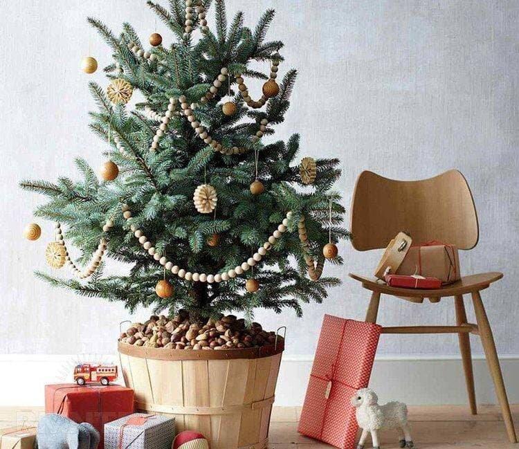 Живая или искусственная: какую елку стоит поставить в этом году, - ФОТО , фото-3