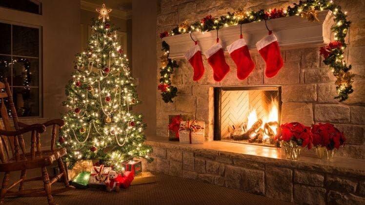 Живая или искусственная: какую елку стоит поставить в этом году, - ФОТО , фото-1