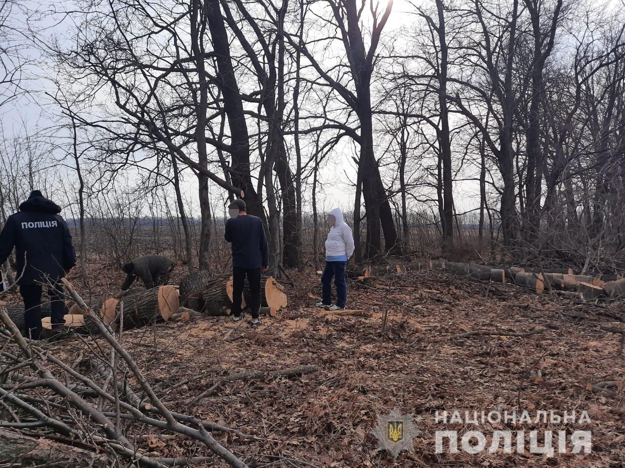 """Под Харьковом """"черные лесорубы"""" незаконно вырубали деревья, - ФОТО, фото-1"""