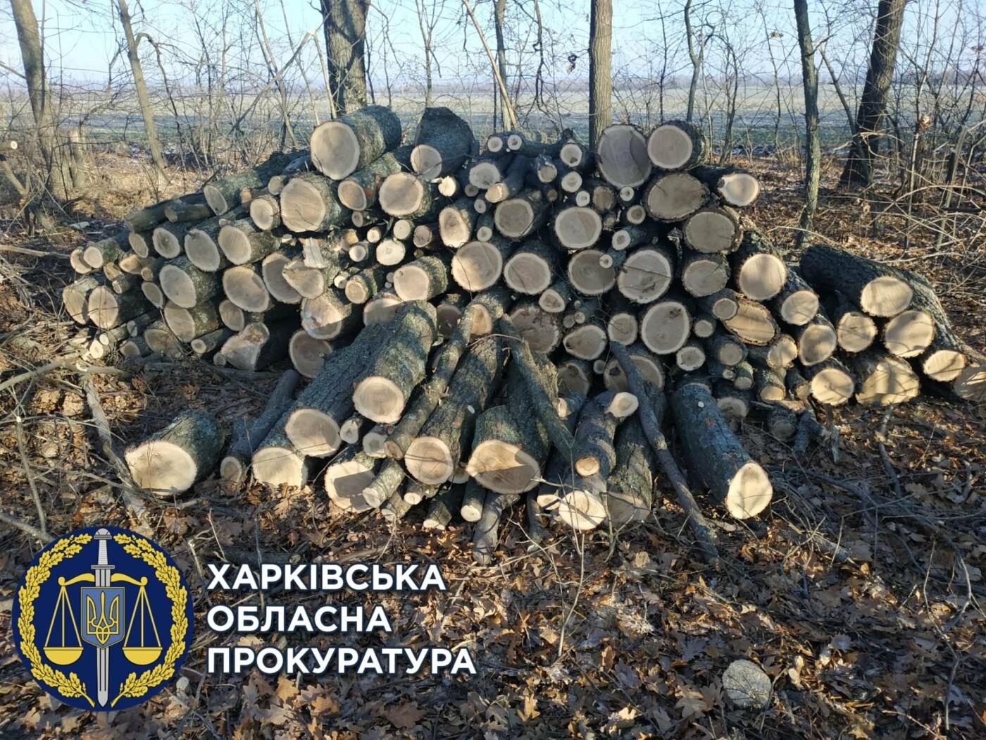 """На Харьковщине будут судить двух """"черных лесорубов"""", уничтоживших деревьев на 750 тысяч гривен, - ФОТО, фото-1"""
