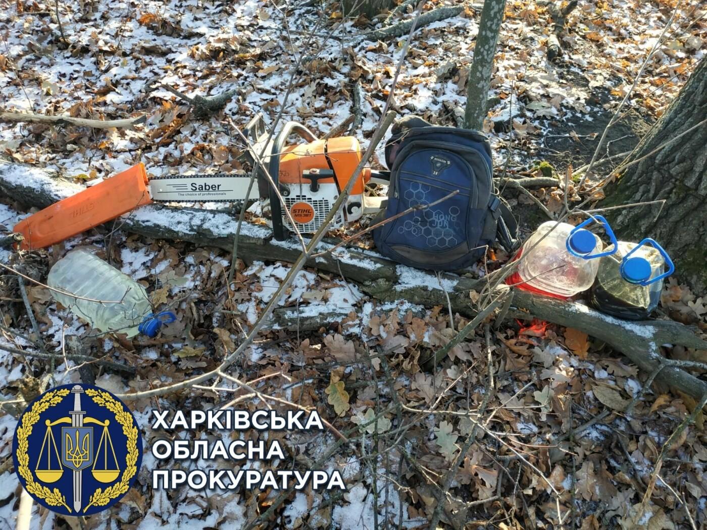 """На Харьковщине будут судить двух """"черных лесорубов"""", уничтоживших деревьев на 750 тысяч гривен, - ФОТО, фото-2"""