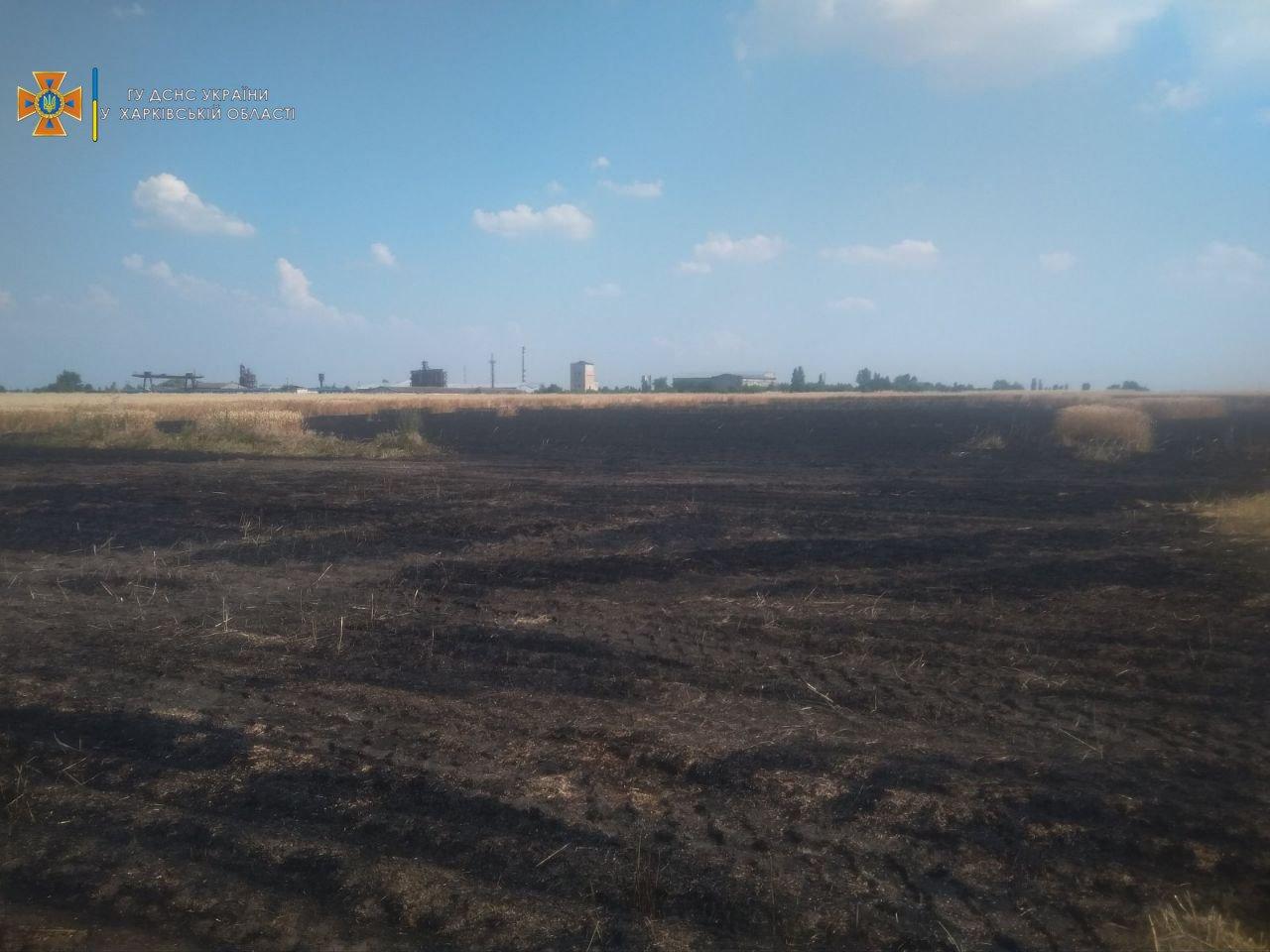 В Харьковской области спасатели не дали сгореть сотне гектар пшеничного поля, - ФОТО, фото-1