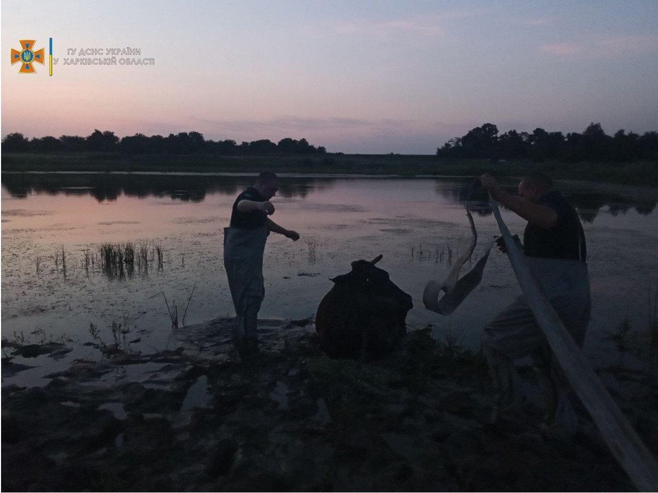 В Харьковской области спасатели доставали из пруда корову, - ФОТО, фото-1
