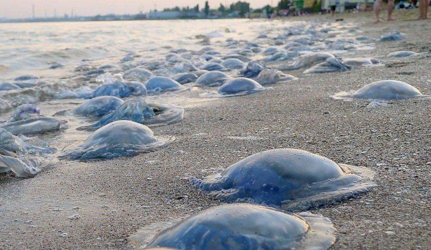 На грани экологической катастрофы. Как незаконное строительство РФ Крымского моста привело к нашествию медуз в Азовском море, - ФОТО, фото-1
