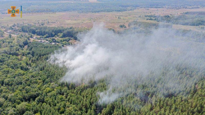 Огонь мог перекинуться на жилые дома: в Харьковской области загорелся хвойный лес, - ФОТО, фото-2