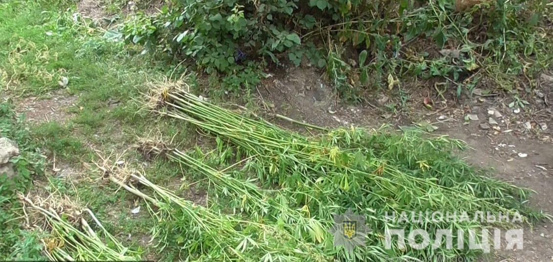 На Харьковщине силовики «накрыли» плантацию наркотиков, которые выращивал местный житель, - ФОТО, фото-2
