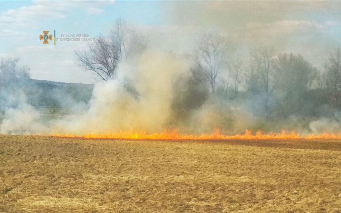 На Харьковщине за последние сутки спасатели тушили три десятка пожаров на открытых территориях, - ФОТО, фото-1