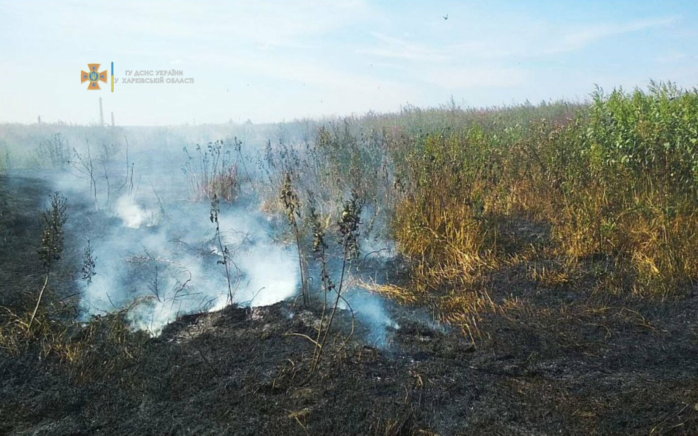 На Харьковщине за последние сутки спасатели тушили три десятка пожаров на открытых территориях, - ФОТО, фото-2
